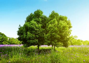 Jardinerie du carrefour arbre