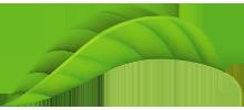 feuille-plante