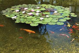 jardinerie du carrefour - bassin