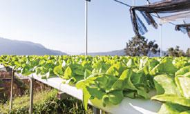 jardinerie du carrefour - hydroponique