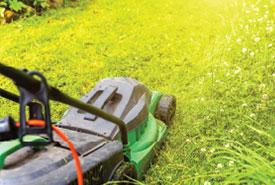 jardinerie du carrefour - Pelouse