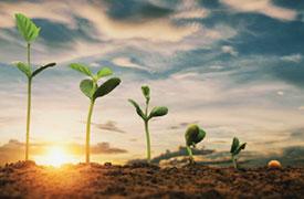 jardinerie du carrefour - semis-bouture