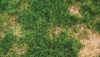 Trucs et conseil pelouse: Arroser et tondre efficacement